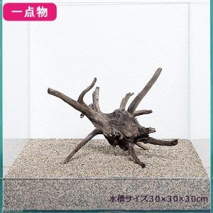 一点物 レイアウト流木単体 Typeブランチ 30cm水槽用 230550 関東当日便