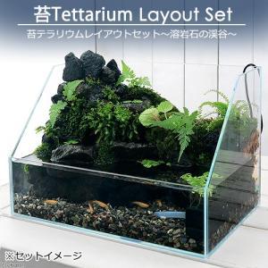 (観葉植物)苔Terrarium レイアウトセット 〜溶岩石の渓谷〜 説明書付 沖縄別途送料