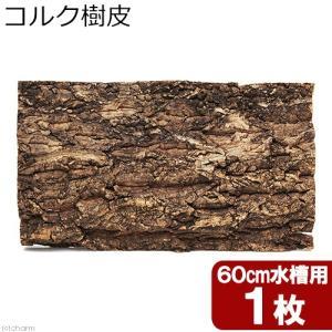 コルク樹皮 60cm水槽用 1枚 バックパネル ビバリウム 関東当日便|chanet