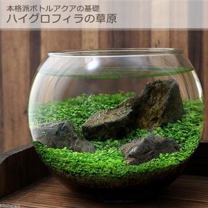 本格派ボトルアクアの基礎〜ハイグロフィラの草原〜