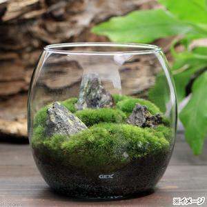 メーカー:用品+生体植物セット メーカー品番:50537 ▼▲ GEX グラスアクアリウム ドロップ...