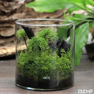 (観葉植物)GEX グラスアクアリウム ポット Hセット 本州四国限定