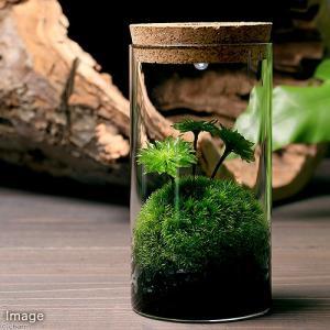 (観葉植物)LEDライト付き ガラスボトル G−51 苔レイアウトセット 本州四国限定
