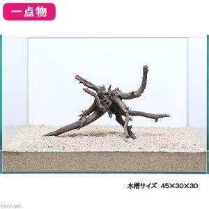 一点物 レイアウト流木単体 Typeブランチ 45cm水槽用 235631 関東当日便
