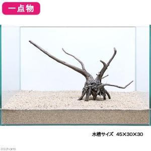 一点物 レイアウト流木単体 Typeブランチ 45cm水槽用 235636 関東当日便