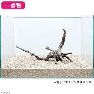 一点物 レイアウト流木単体 Typeブランチ 45cm水槽用 236063 関東当日便