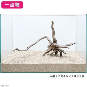 一点物 レイアウト流木単体 Typeブランチ 45cm水槽用 236064 関東当日便