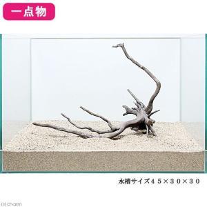 一点物 レイアウト流木単体 Typeブランチ 45cm水槽用 236065 関東当日便