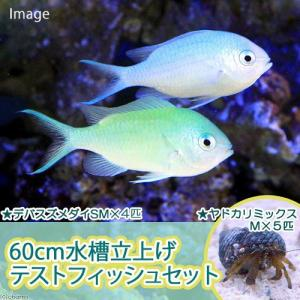 (海水魚)60cm水槽立上げテストフィッシュセット(1セット) 北海道航空便要保温