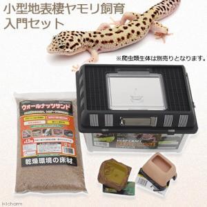 小型地表棲ヤモリ飼育入門セット 飼育セット 爬虫類 ヤモリ 関東当日便