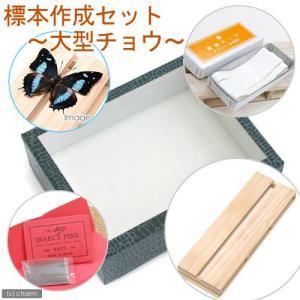 標本作成セット 〜大型チョウ〜 昆虫 標本用品 標本セット 関東当日便 chanet