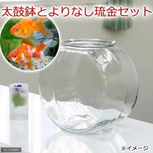 金魚鉢 大と金魚のセット! おしゃれなガラス製金魚鉢に、金魚の代表格の琉金を組み合わせたセットです。...