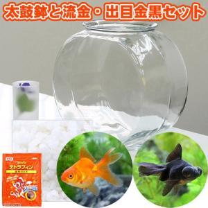 インテリア性の高い金魚鉢と金魚のセット! おしゃれなガラス製金魚鉢に、金魚の代表格の琉金と真っ黒で可...