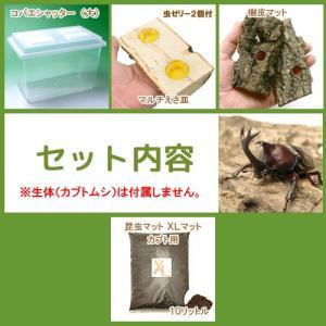 国産カブトムシ産卵飼育セット 器具のみのセット 関東当日便|chanet