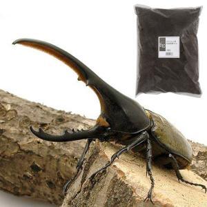 (昆虫)ヘラクレス・ヘラクレス幼虫(1匹) + XLマット カブト用 10リットル(説明書付) 本州・四国限定|chanet