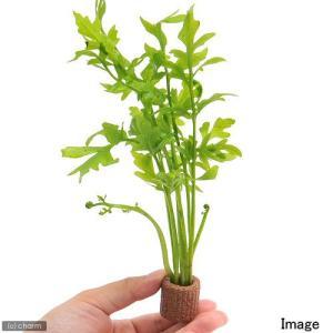 (水草)ライフマルチ(茶) ウォータースプライト...の商品画像
