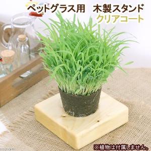 ペットグラス用 木製スタンド クリアコート 関東当日便 chanet