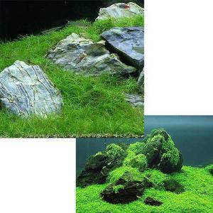 (水草)前景 水上葉(無農薬)2種セット キューバパールグラス キューブS(1個)+ヘアーグラス シ...