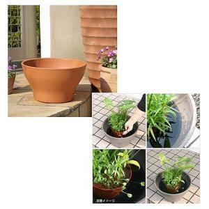 メーカー:用品+生体植物セット メーカー品番: スイレン 睡蓮 栽培 育て方 ビオトープ 鉢 水辺植...