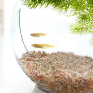 おしゃれなガラス製金魚鉢!かわいくレイアウトしてインテリアに!インテリア向けのドラム型の鉢にメダカを...