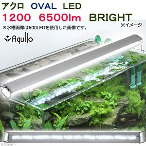 アクロ OVAL LED 1200 6500lm BRIGHT Aqullo 120cm水槽用 ライト 沖縄別途送料 関東当日便|chanet