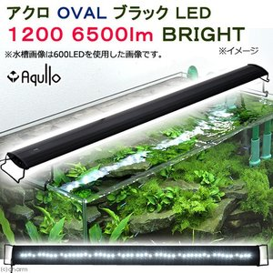 アクロ OVALブラック LED 1200 6500lm BRIGHT Aqullo 120cm水槽用 沖縄別途送料 関東当日便|chanet