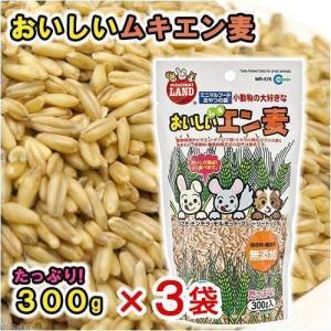 マルカン おいしいムキエン麦 300g 3袋 うさぎ おやつ 関東当日便