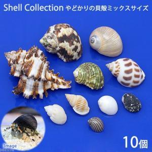 (海水魚)貝殻 やどかりの貝殻 ミックスサイズ おまかせ(殻口3〜20mmミックス)(10個)(形状おまかせ)