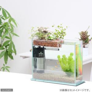 (めだか 観葉植物)私のアクアリウム 〜お手軽アクアテラリウムセット〜(グラスガーデンS300 プランツアクアスタイル)おしゃれ水槽 本州・四国限定