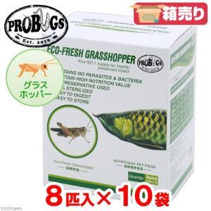 プロバグズ 真空生昆虫 グラスホッパー (8匹×10袋入) PROBUGS ECO-FRESH GRASSHOPPER 関東当日便|chanet