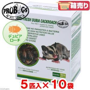 プロバグズ 真空生昆虫 デュビアローチ (5匹×10袋入) PROBUGS ECO-FRESH DUBIAROACH 関東当日便|chanet