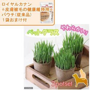 (観葉植物)ペットグラス 猫草 ネコちゃんの草 燕麦 直径8cmECOポット植え(無農薬)(3ポット)+ロイヤルカナン(皮膚被毛に配慮)パウチおまけ付 chanet