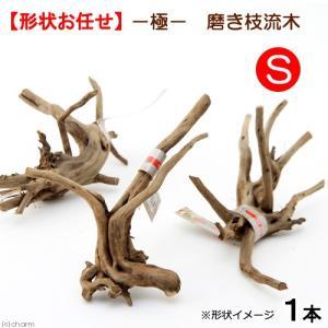 極 磨き枝流木 S 形状お任せ