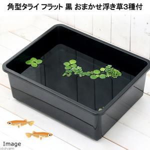 メーカー:草■0〜30 メーカー品番:3種1株ずつ _aqua _gardening 金魚・メダカ ...