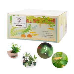 (めだか 水草)私のアクアリウム アクアテリア N190 メダカ飼育セット(生体・植物付き)おしゃれ水槽セット 本州・四国限定|chanet