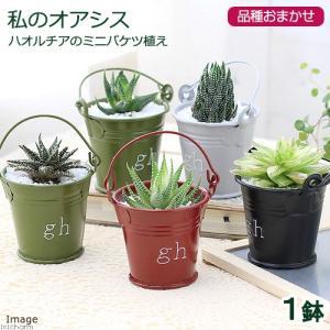 ※植物の為、入荷状況などにより状態に差異がある場合がございます。※季節によって紅葉などで姿が違う場合...