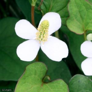 メーカー:■神田直接 メーカー品番: muryotassei_600_699 _gardening ...