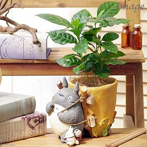 (観葉植物)ジブリプランターカバー トトロのお届けよいこらしょ 観葉植物セット(コーヒーの木) 沖縄不可|chanet