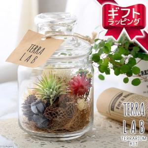 (観葉植物)ギフト ボトルテラリウム作成キット ドライフラワー&ティランジア(1セット) chanet