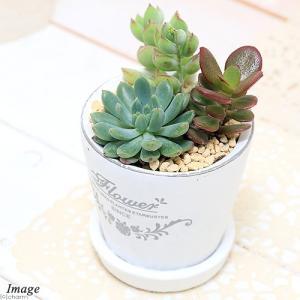 アンティーク風のホワイト陶器鉢がオシャレ!表情豊かで管理の簡単な多肉植物を3種類寄せ植えしました。植...