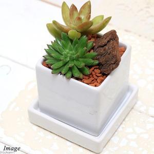 光沢陶器鉢仕立てでインテリアにもピッタリ! 表情豊かで管理の簡単な多肉植物を3種類寄せ植えしました。...