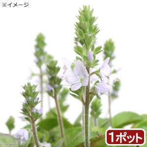メーカー:■神田直接 メーカー品番:2 muryotassei_600_699 _gardening...