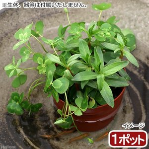 メーカー:■神田直接 メーカー品番: muryotassei_800_899 _aqua _gard...