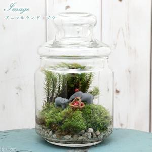 メーカー:用品+生体植物セット メーカー品番: koketera MS34 _hachu コケシリー...