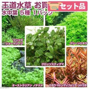 (水草 熱帯魚)熱帯魚用王道水草 お買い得セット(水中葉)5種(無農薬)(1パック)