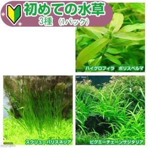 (水草)初めての水草 3種(1パック)説明書付 熱帯魚 北海道航空便要保温