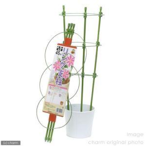リング支柱 45cm(4〜5号鉢用) 関東当日便の商品画像