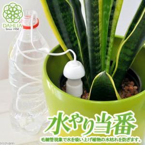 水やり当番 Mサイズ(2ヶ組) 留守 自動 水遣り器 関東当日便|chanet