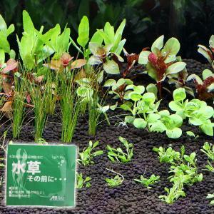 水草表面の不純物の除去に!水草表面の残留農薬、付着生物(貝の卵など)、腐敗菌などの汚れを落とします。...