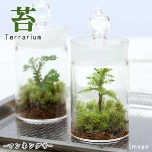 (観葉植物)苔Terrarium マンネングサ ガラスボトルミニ 説明書付 テラリウムキット 本州・四国限定